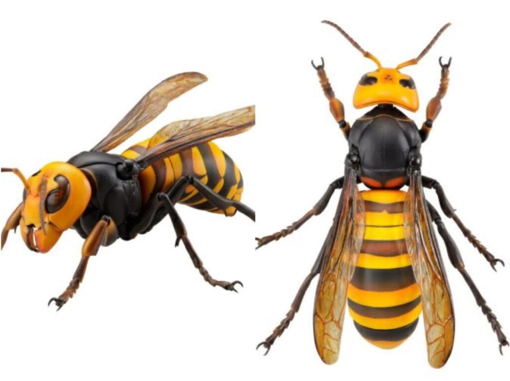 KAIYODO – リボジオ オオスズメバチ